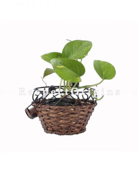 Buy Small Hand Braided Round Rattan Cane Planter with Wrought Iron trimmingin 7x5 inches|RespectOrigins